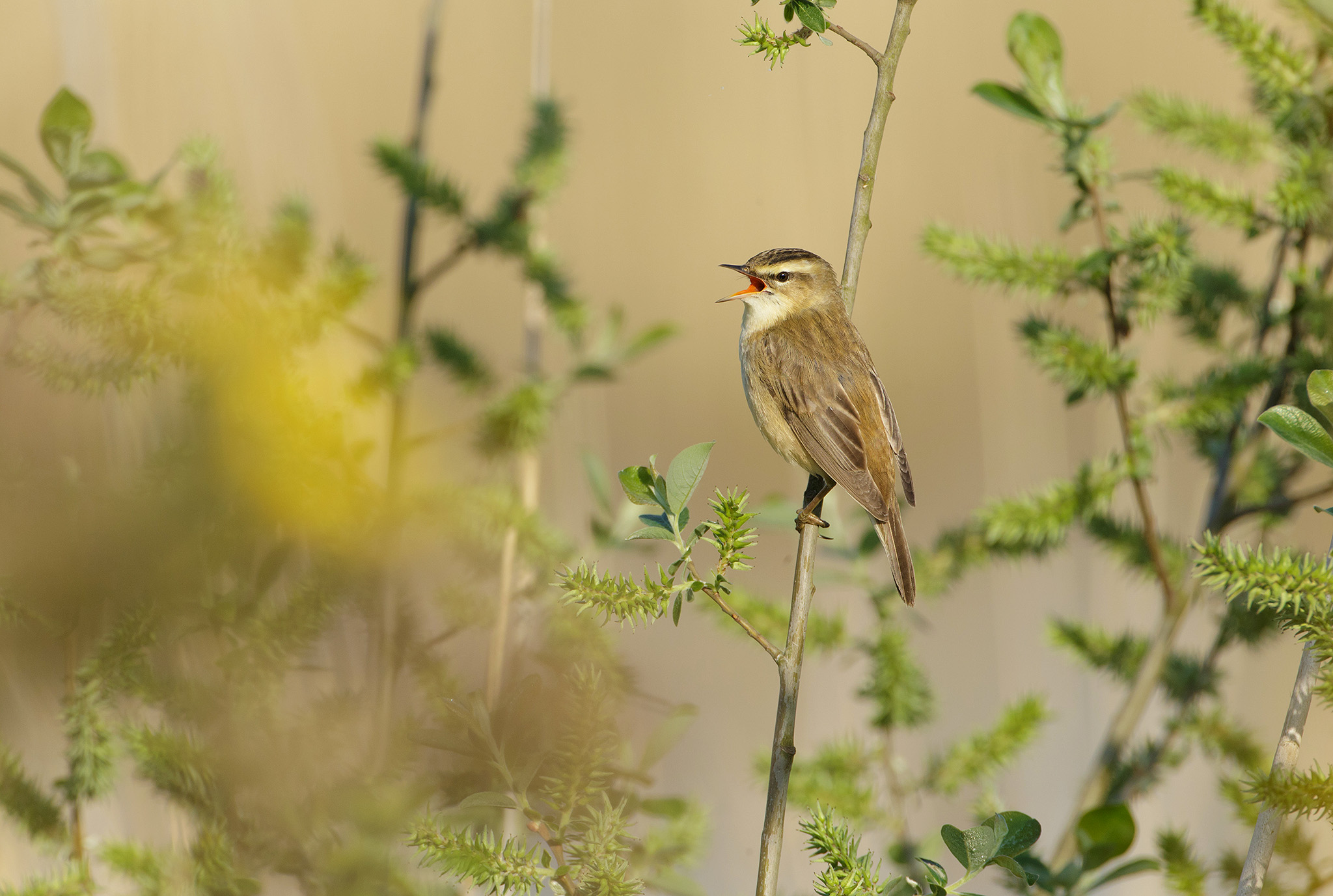 how to photograph warblers