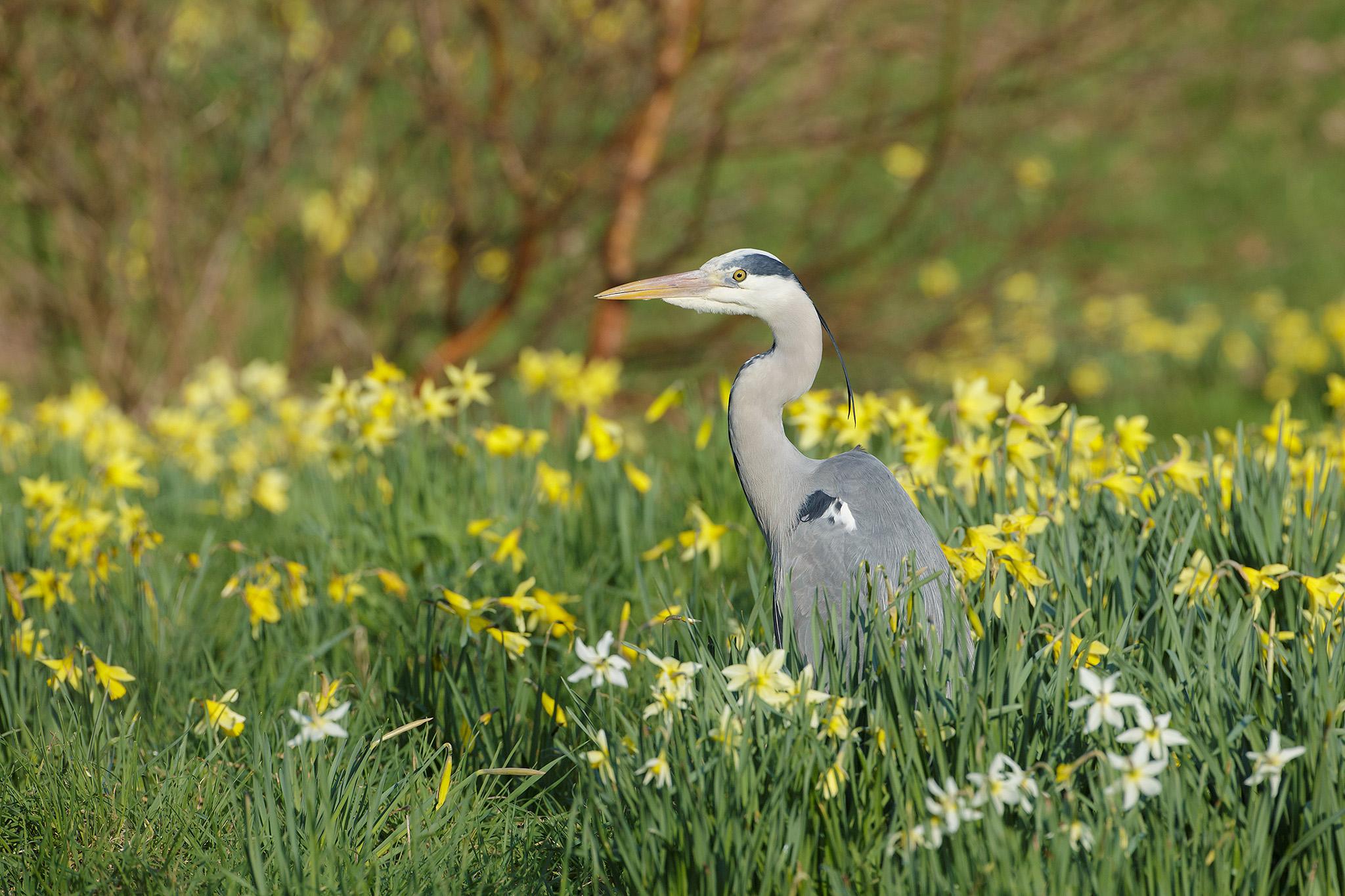 springbirds-10