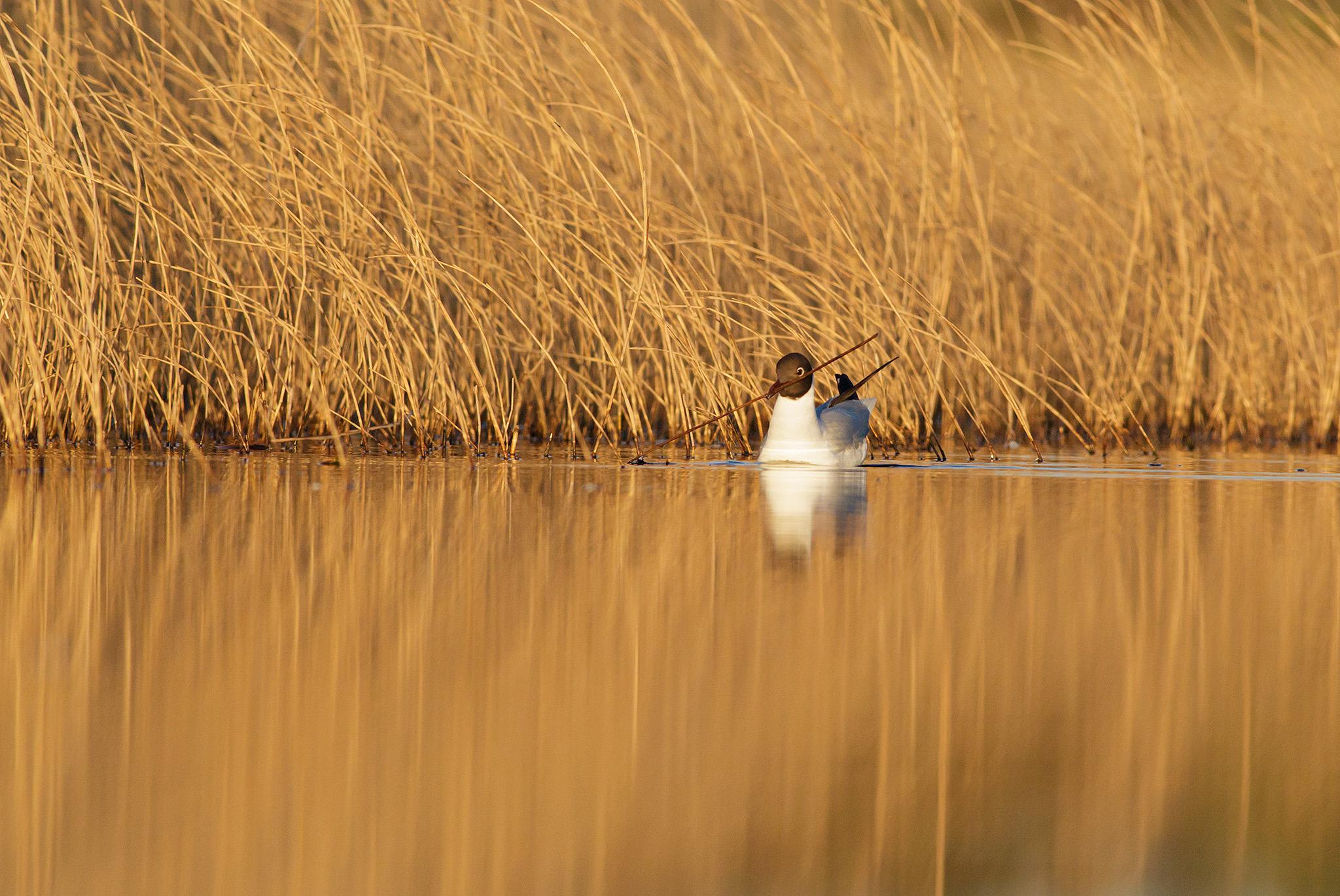 springbirds-28