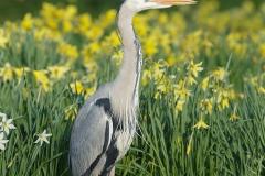 springbirds-11