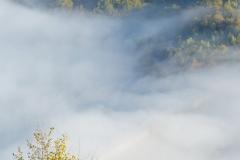 serbian mist