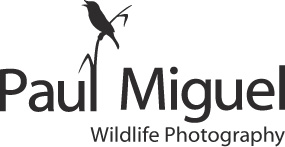 Paul Miguel Wildlife Photography