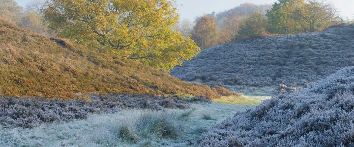 Landscape Photography: How to Photograph Frost
