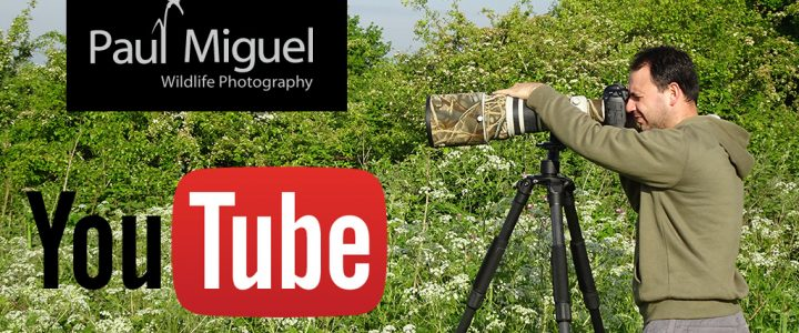 paul miguel youtube