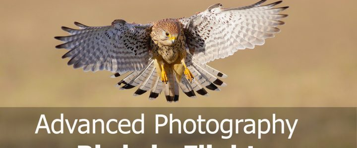 How to Photograph Birds in Flight: Advanced Photography