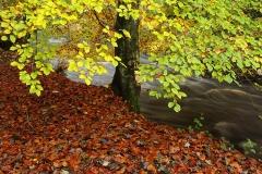 autumncolours10
