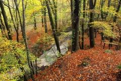 autumncolours11
