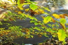 autumncolours12