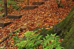autumncolours121