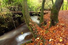 autumncolours15