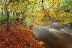 autumncolours6