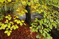 autumncolours8