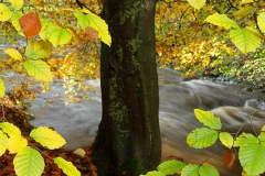 autumncolours9