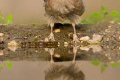 jay bird photo