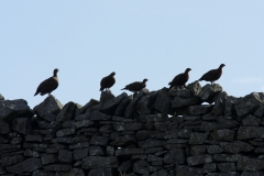 redgrouse group