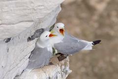 springbirds27