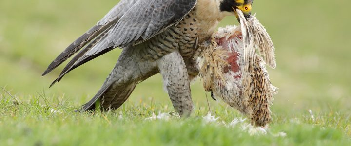 Birds of Prey Photography Courses