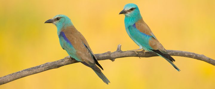 Serbian Birds Photo Tour Trip Report